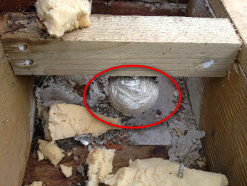 First wasp nest of 2013 found in a flat roof in Milton Abbas, Dorset