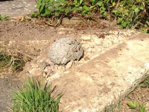 Wasp nest under flagstone in Hamworthy