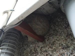 Wasp nest in Upton